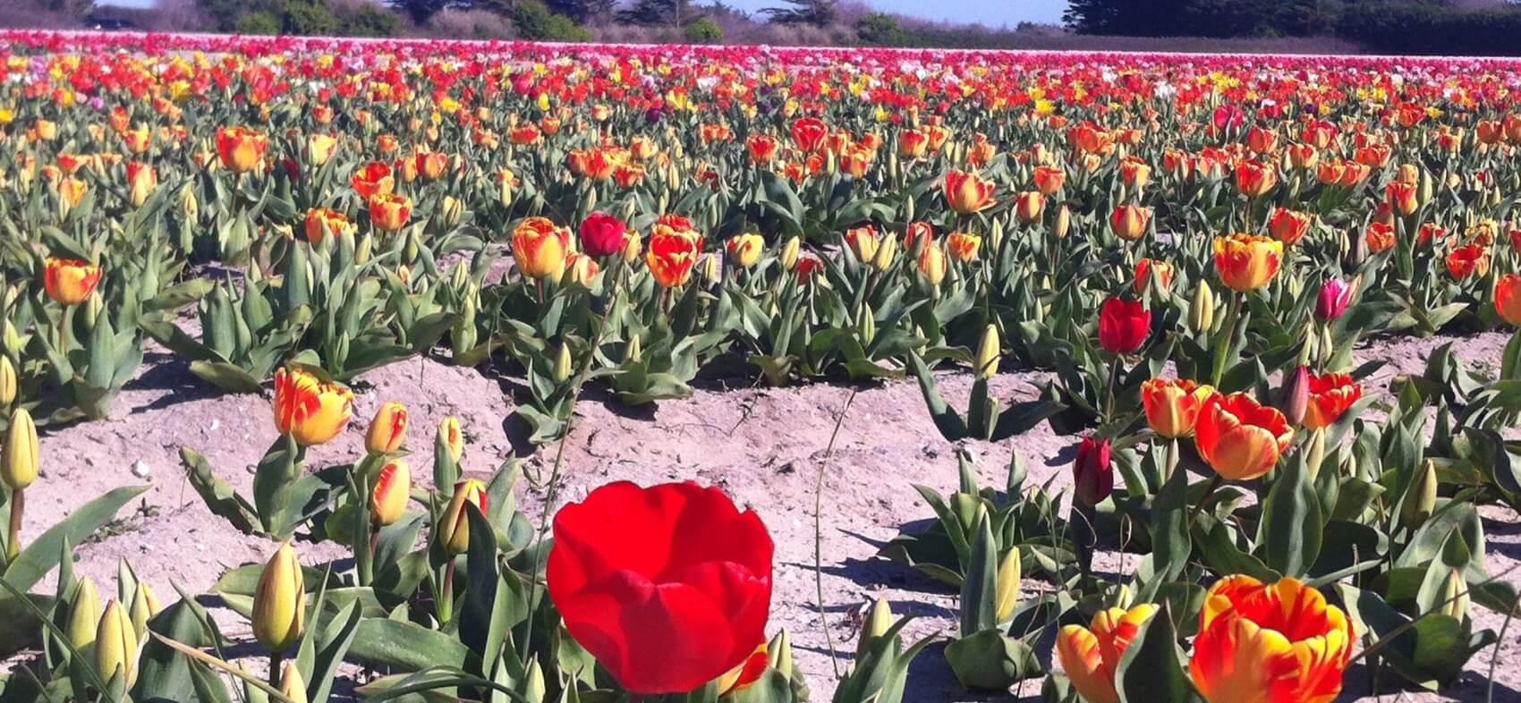 Fête des fleurs en Pays Bigouden