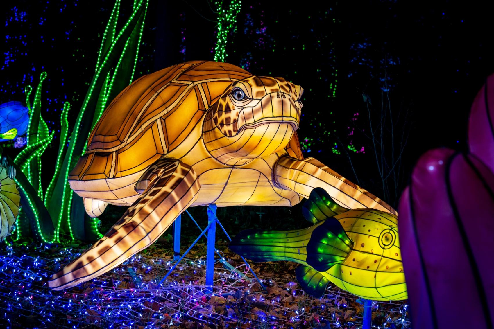 Festival des Lumières Sauvages au ZooSafari de Thoiry