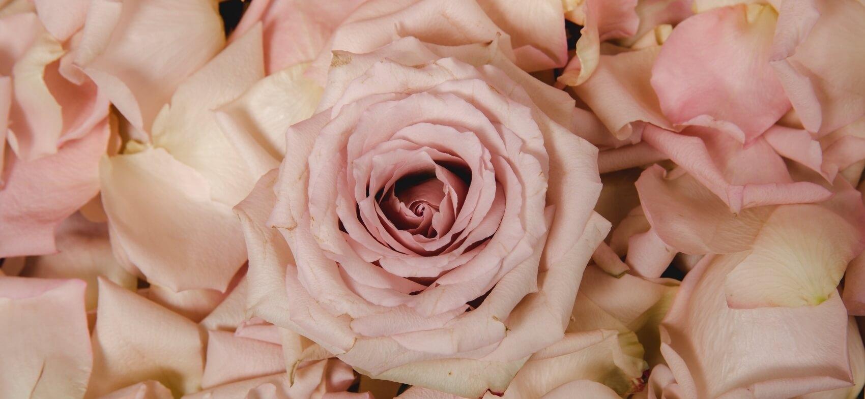 Journée de la Rose - Doué la Fontaine