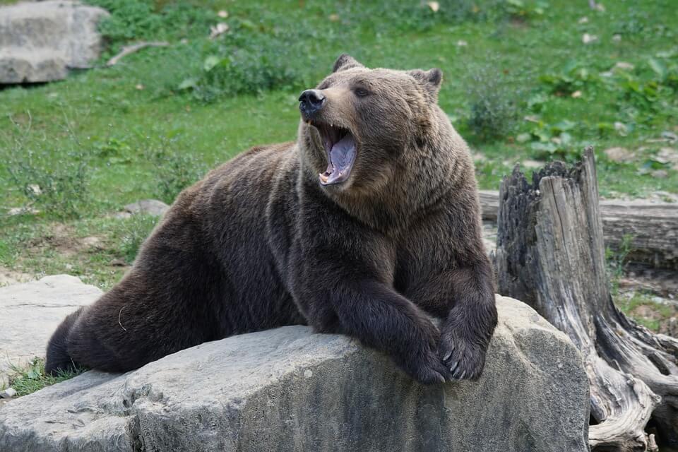 Découverte du Zoo Refuge de la Tanière